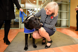 Court Minister Amy Adams visiting Tauranga District Court who met Louie the dog which helps calm child witnesses giving evidence at trials. Photo/George Novak