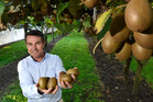 David McLaren from PGG Wrightson Real Estate Tauranga said green kiwifruit blocks were selling well. Photo / George Novak