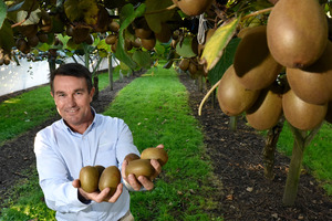 David McLaren from PGG Wrightson Real Estate Tauranga said green kiwifruit blocks were selling well.