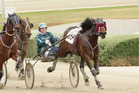 Speeding Spur has good to very good gate speed. Photo / Harness Racing Victoria
