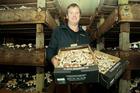 Te Mata Mushroom Company director Michael Whittaker.