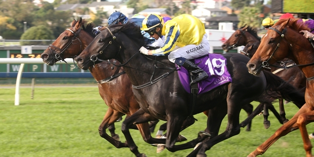 Sound Proposition gets up to win the Manco Easter Stakes. Photo / Trish Dunell