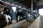 Farmers considering leaving Fonterra lodged their