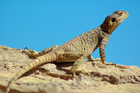 The two amorous reptiles had no concern for the jet they were blocking. File photo / iStock