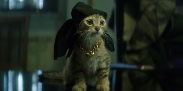Loading Keanu the kitten in a scene from the action comedy, Keanu.