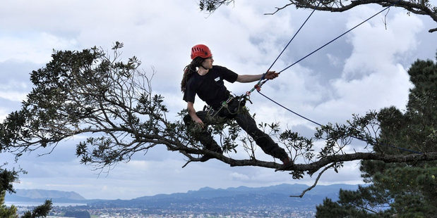 Tauranga's James Kilpatrick trains in the treetops on Mount Eden, Auckland, ahead of the International Tree Climbing Competition in 2012. Photo/Supplied