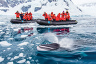 Tourists from the National Geographic Explorer ship watch a curious Minke whale at Paradise Bay in Antarctica. Photo / Supplied
