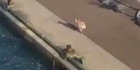 Watch: Parents miss cruise ship which departs with kids
