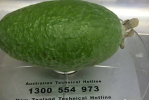 Michaela Meredith's 150g feijoa weighs in well under 2015's heaviest, a 385g whopper.
