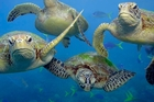Green turtles and thousands of other marine species call the Kermadec area home. Photo / Troy Mayne