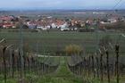 Vineyards surround the village of Kallstadt, Germany. Donald Trump's grandfather Friedrich Trump was born and raised in Kallstadt. Photo / Washington Post