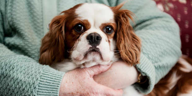 Researchers claim you may be making your pup feel trapped and anxious when you hug them. Photo / iStock
