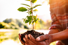 To me it seems that planting trees is a no-brainer, particularly when it comes to land alongside the riparian strip that should not be farmed anyway. Photo / iStock