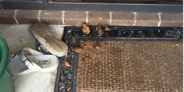 Police were called to a property after a person put dog poo on a neighbour's doorstep. Photo: Cambridge Police/Facebook