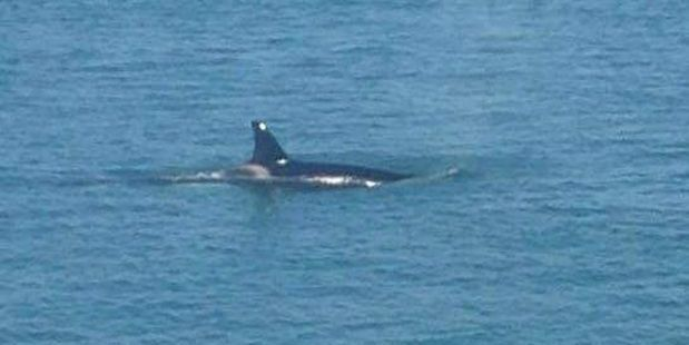 Loading Lisa Sutton got this photo of a whale in Tauranga Harbour yesterday.