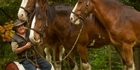 Watch: Clydesdales at Rotorua's Agrodome