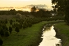 Sunset over Karamu Stream and orchards in Hastings yesterday. Photo / Warren Buckland