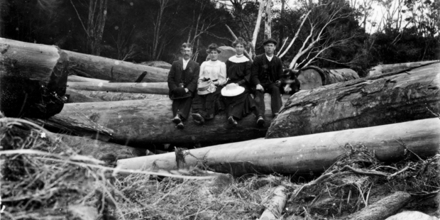 Unknown visitors to Graham's Bush, Springfield, Northland pose among felled kauri logs. Photo / Historic Archive