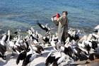 Feeding time on Kangaroo Island. Photo / Danielle Wright
