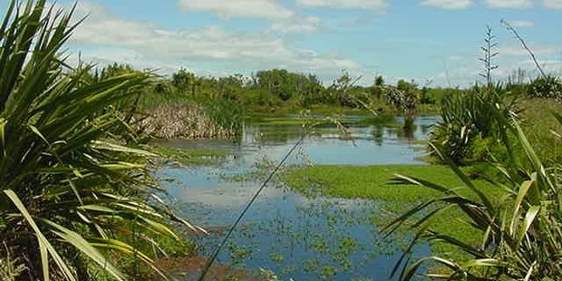 The Lower Kaituna wetland is an important part of the Bay's ecosystem. Photo/file
