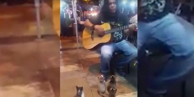 The busker had a captive audience of tiny feline friends. Photo / YouTube