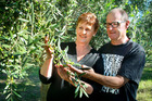 Wayne and Maureen Startup in one of their specialist olive groves in the heart of Hawke's Bay's wine
