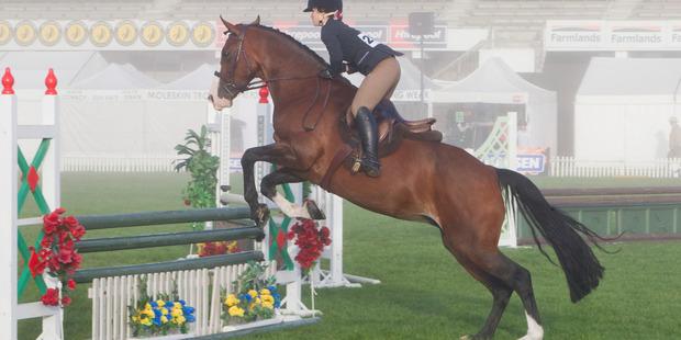 Megan Joustra on Sirocco Tango pictured during the NZ Horse & Pony Magazine Junior & Adult Rider Equitation Champiomship series. Photo / Glenn Taylor