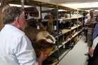 Dr Mike Dickison entertains visitors with the story of a badger in the Whanganui Museum collection. Photo / Stuart Munro