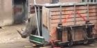 WATCH: Raging rhino attempts to break free