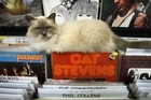 Vinyl Destination specialises in records, comics, toys – and coffee. It is also home to Callaway the cat, who is as much a part of the store as the cash register.