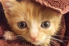 Mac. Photo / Facebook via Massapequa Pet Vet