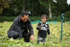 Garden manager Lionel Hotene with son Renata, 2. The garden is growing 80,000 kumara to give away to families, churches, soup kitchens and other marae. Photo / Getty Images