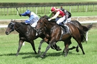 A long time between drinks for Storming The Tower (outer) in the Bay of Plenty Cup in March. Photo / Trish Dunell