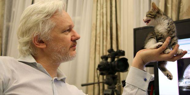 WikiLeaks founder Julian Assange with a kitten in Ecuador's Embassy in London. Photo / AP