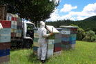 Bee keeper with Comvita. Photo / File
