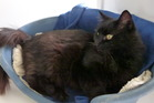 Kona is a friendly and independent cat looking for a home.