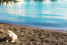 Brookie enjoys his Bay of Islands holiday as much as his owner does.