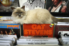 Callaway the cat might look innocent enough but he has caused controversy   due to his presence in new store Vinyl Destination.PHOTO/JOHN BORREN