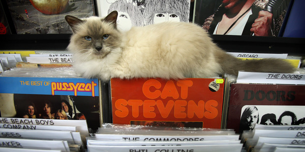 Loading Callaway the cat might look innocent enough but he has caused controversy   due to his presence in new store Vinyl Destination.PHOTO/JOHN BORREN