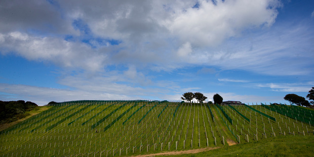 With more than 200 million litres of wine shipping out of the country each year, some clever thinking will be needed as growing conditions change. Photo / NZME