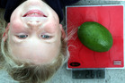 Gonville School student Chelsea Moorhouse, 9, and the giant feijoa grown at the school.