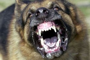 A dog, described as a German Shepherd, jumped on the boy while he was at school. Photo / File