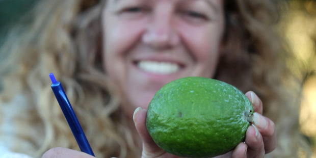 This 232g feijoa, grown by Hastings woman Zara Monrad, is her biggest this season. Photo / Duncan Brown