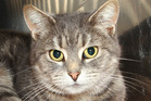 Bonnie is a six-year-old cat looking for a new home.