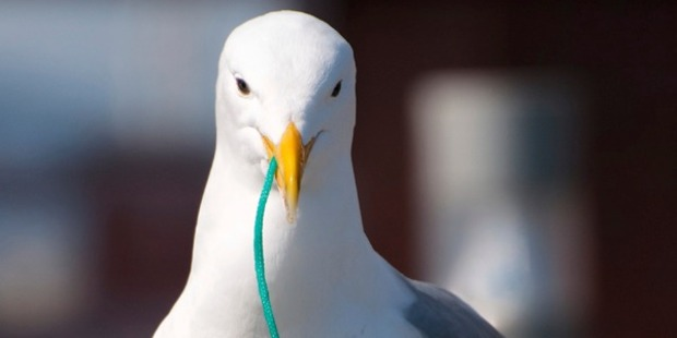 The seagull had to be put down after it was badly injured. Photo: iStock