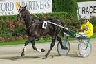 Field Marshal is the $1.55 favourite for the four-year-old male pacing division. Photo / Greg Bowker