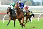 Let Me Roar contests race 9 at Te Rapa today. Photo / Race Images