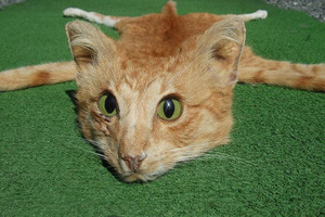 A taxidermy cat is among one of the many strange things people sell on Trade Me. Photo / File