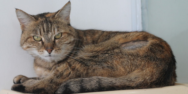 Mona is a four-year-old tabby looking for a quiet home.