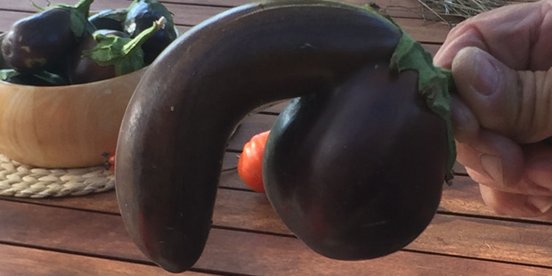 The phallic eggplant is being sold on Trade Me with proceeds going to the New Zealand Prostate Cancer Foundation. Photo / Supplied